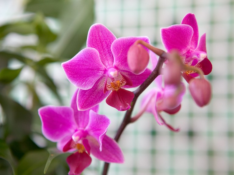 How To Get An Orchid To Flower Again Bbc Gardeners World Magazine