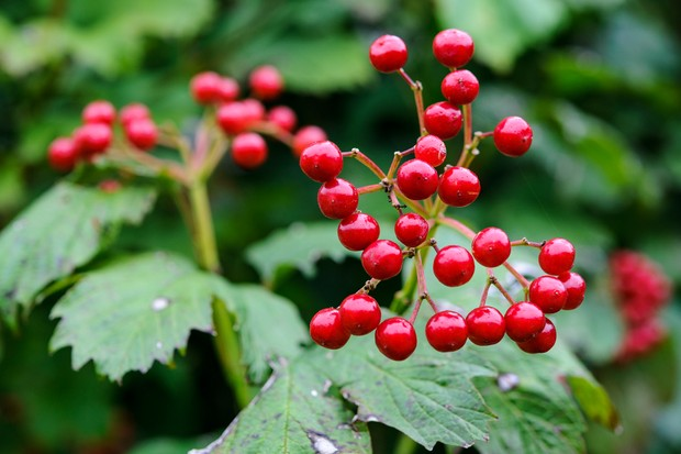 Top 10 Plants For Birds (pictures) - BBC Gardeners' World