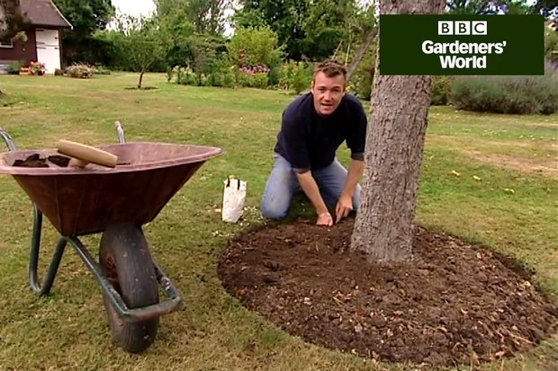 How to plant colchicums
