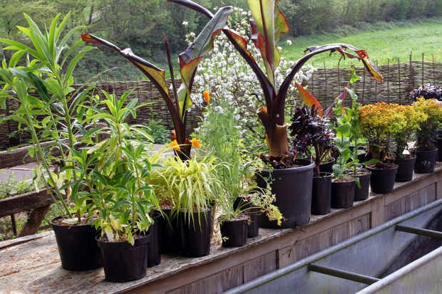 How to create an exotic container display - standing the plants together
