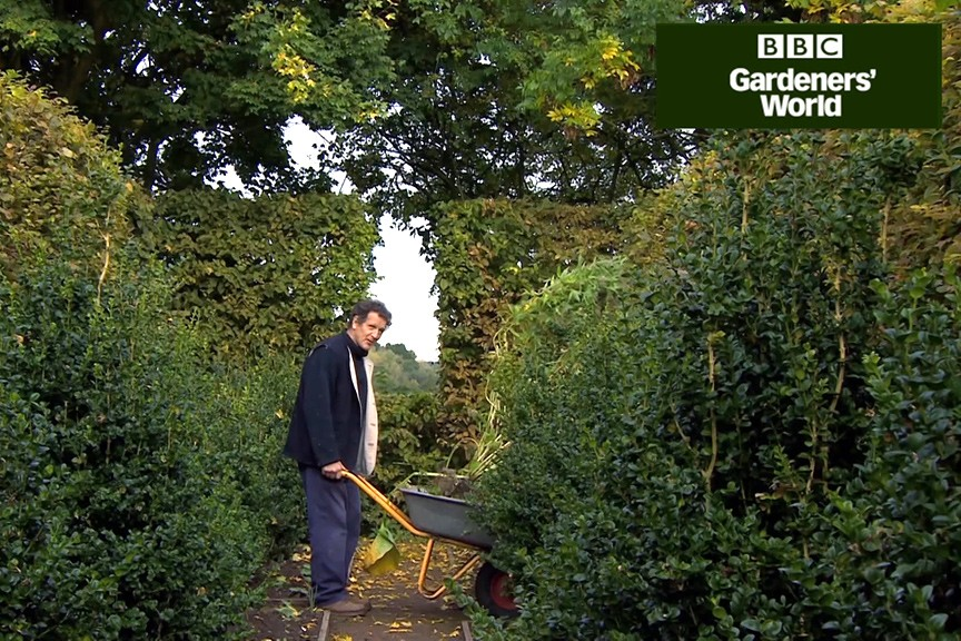 How to move a perennial in autumn video