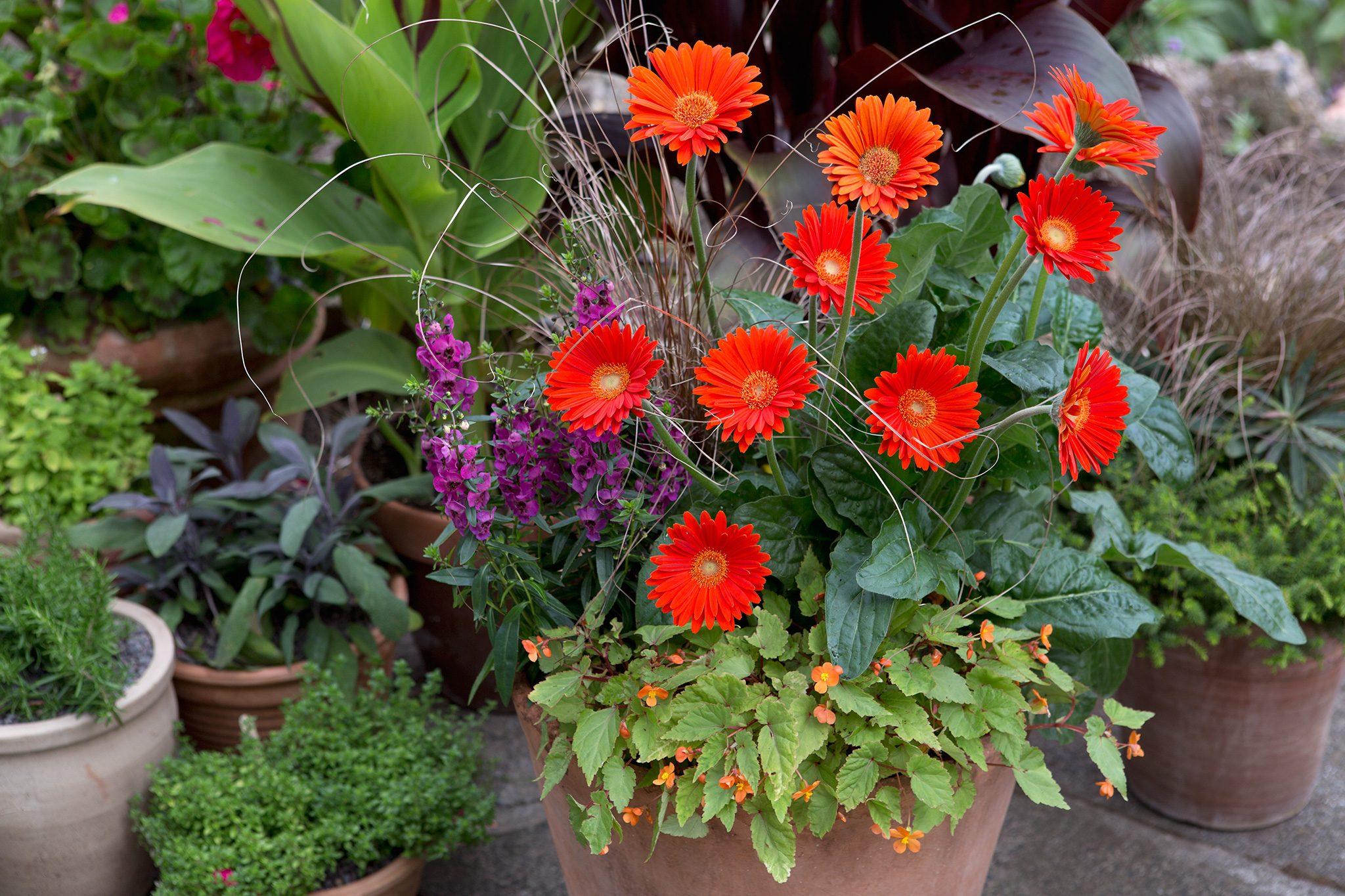 Bedding container & 20 Summer Container Ideas - BBC Gardeners\u0027 World Magazine