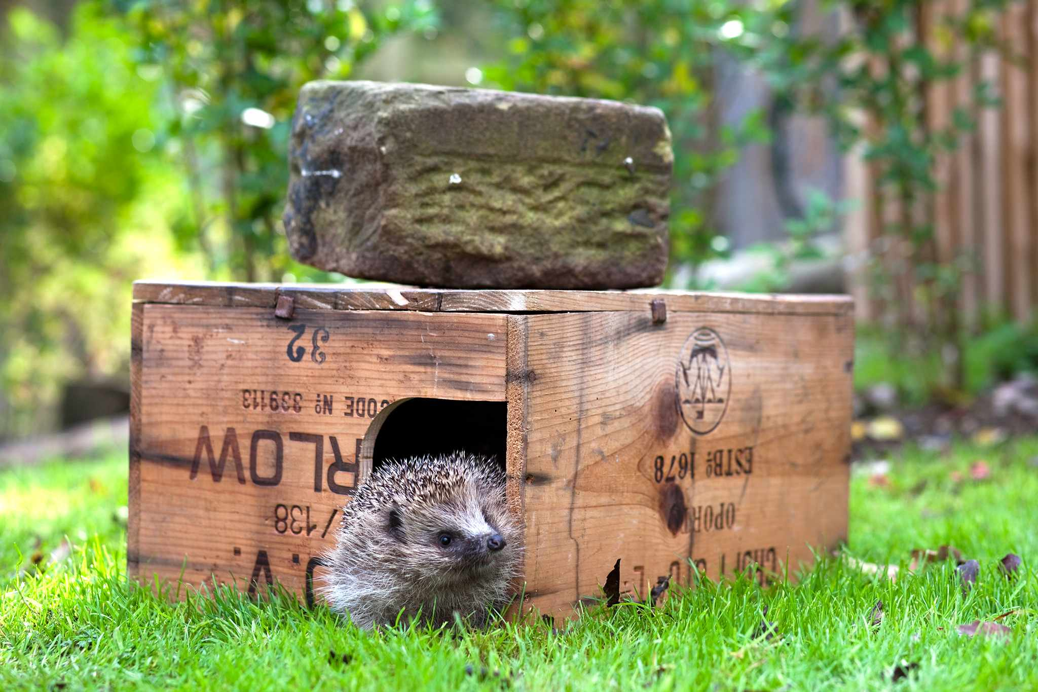 Best Wildlife Homes to Make
