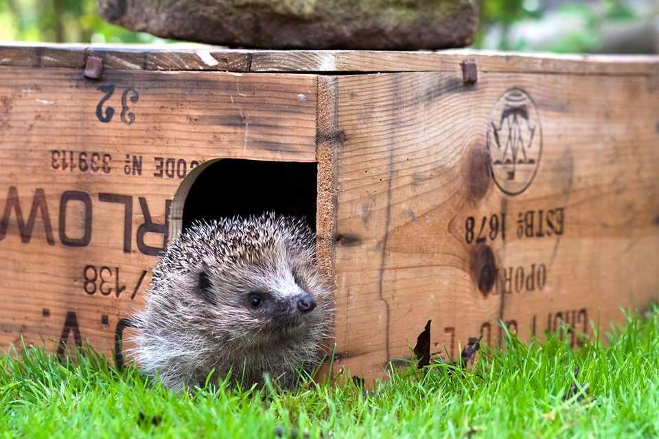Best Wildlife Homes to Make