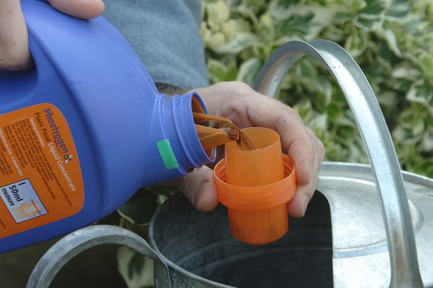 Measuring out liquid feed to dilute in a watering can