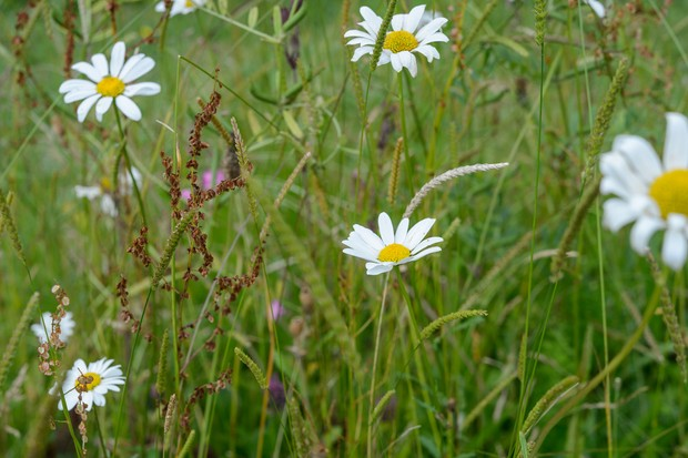 alternative-lawn-mix-for-attracting-wildlife-with-various-wildflowers