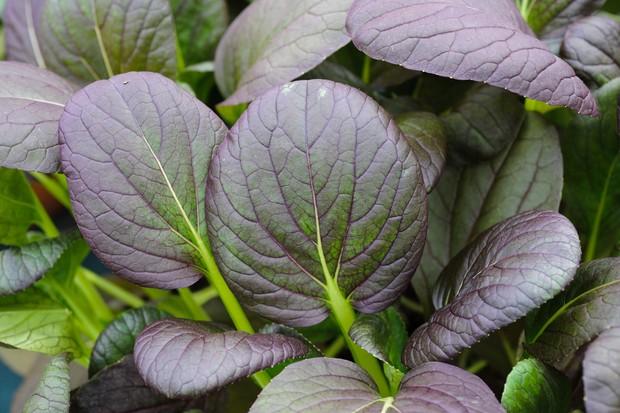 mustard-leaf-2