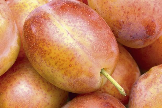 growing-plums-in-pots-2