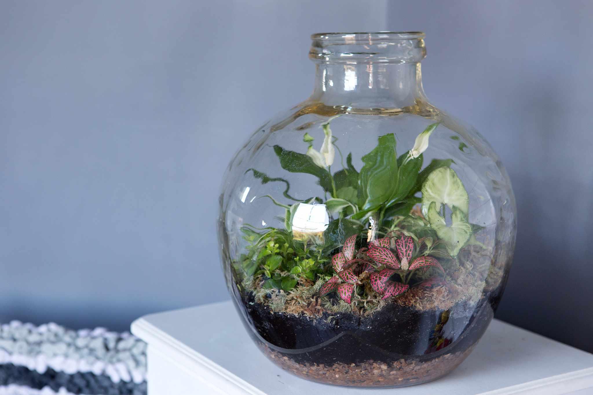 How To Create a Bottle Garden