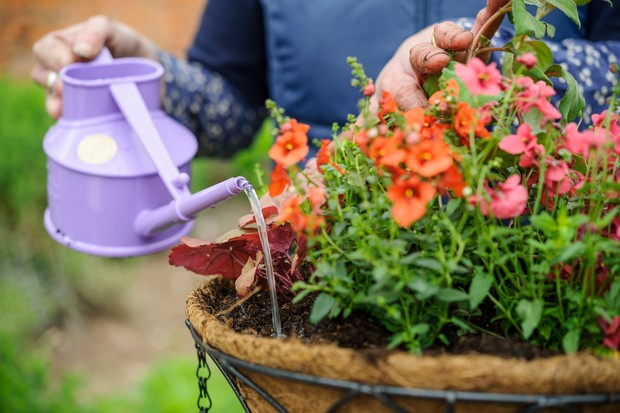 How to create a summer hanging basket - watering the basket