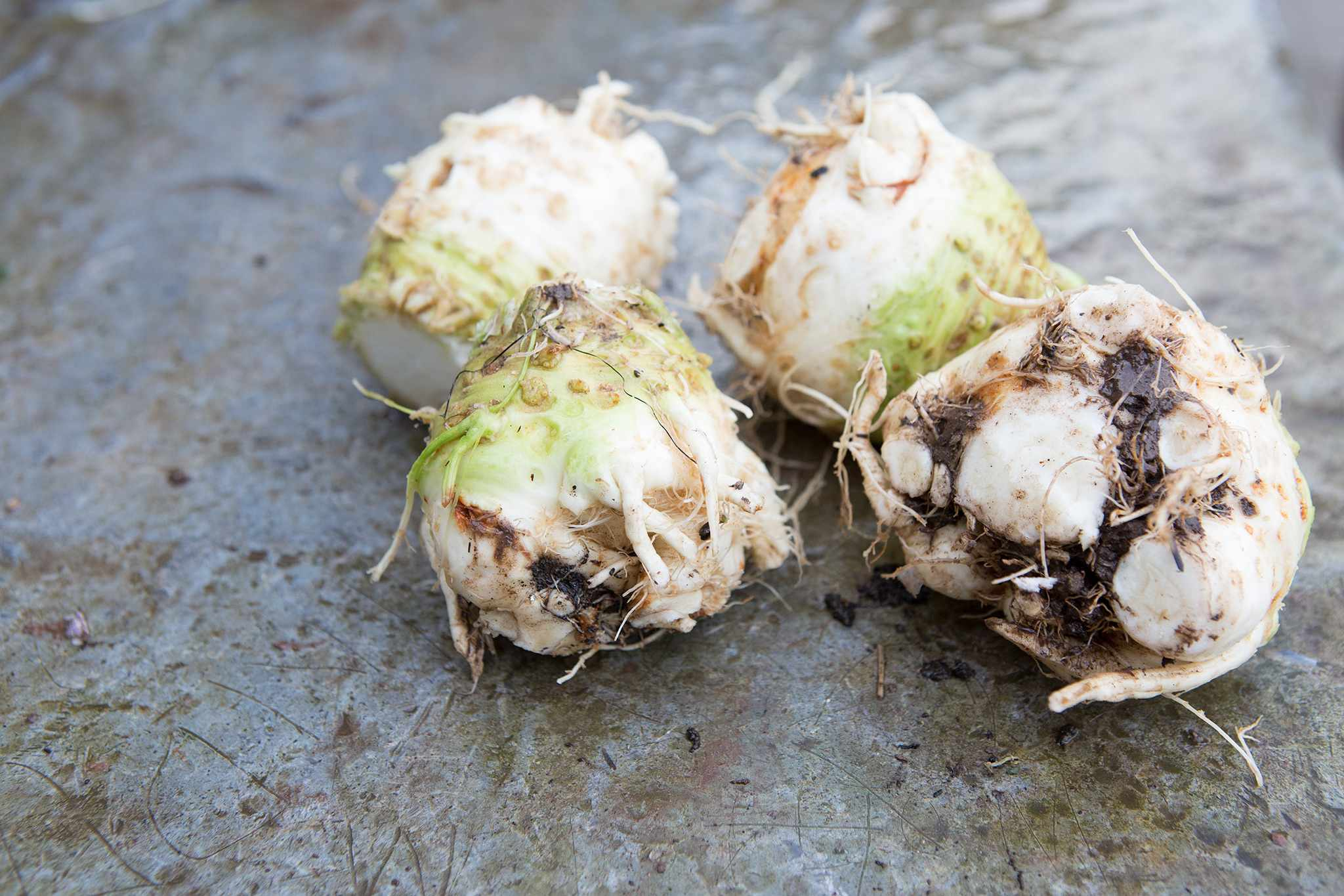 Celeriac – Grow Guide