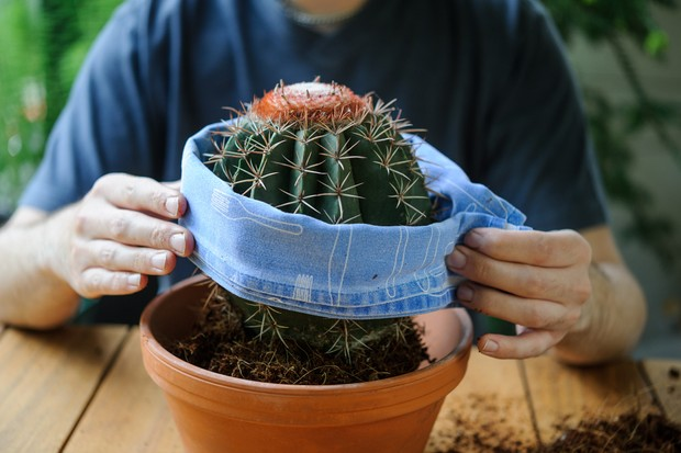 lower-the-cactus-into-its-new-pot-2