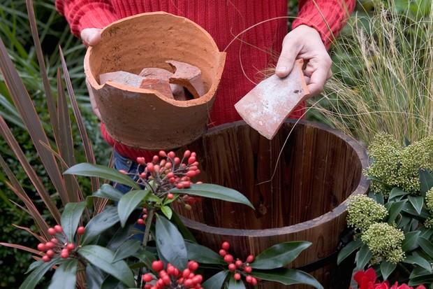 Skimmia pot display - adding crocks