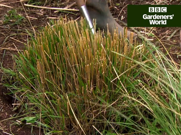 Splitting Ornamental Grasses Video Bbc Gardeners World Magazine
