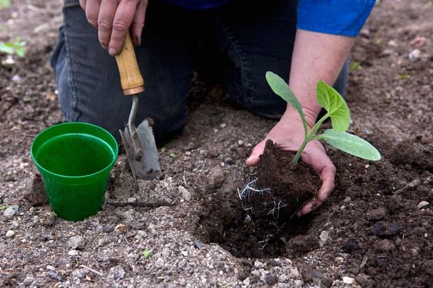 planting-squash-outdoors-2
