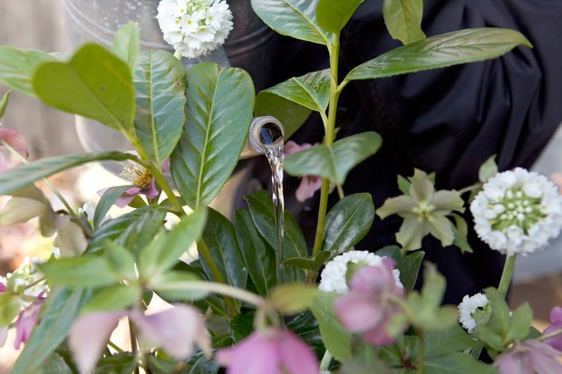 watering-in-the-plants-3