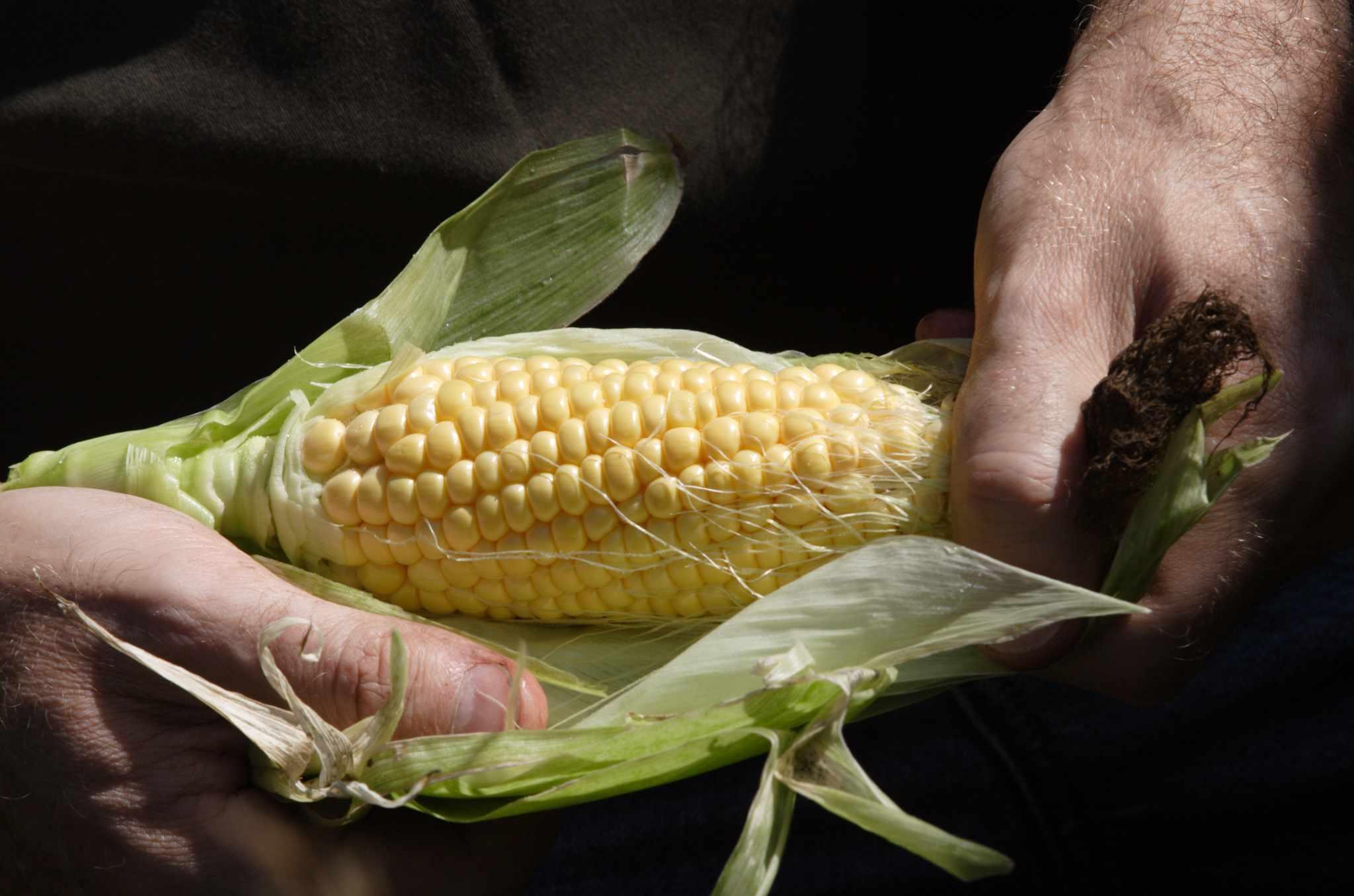 How to grow sweetcorn
