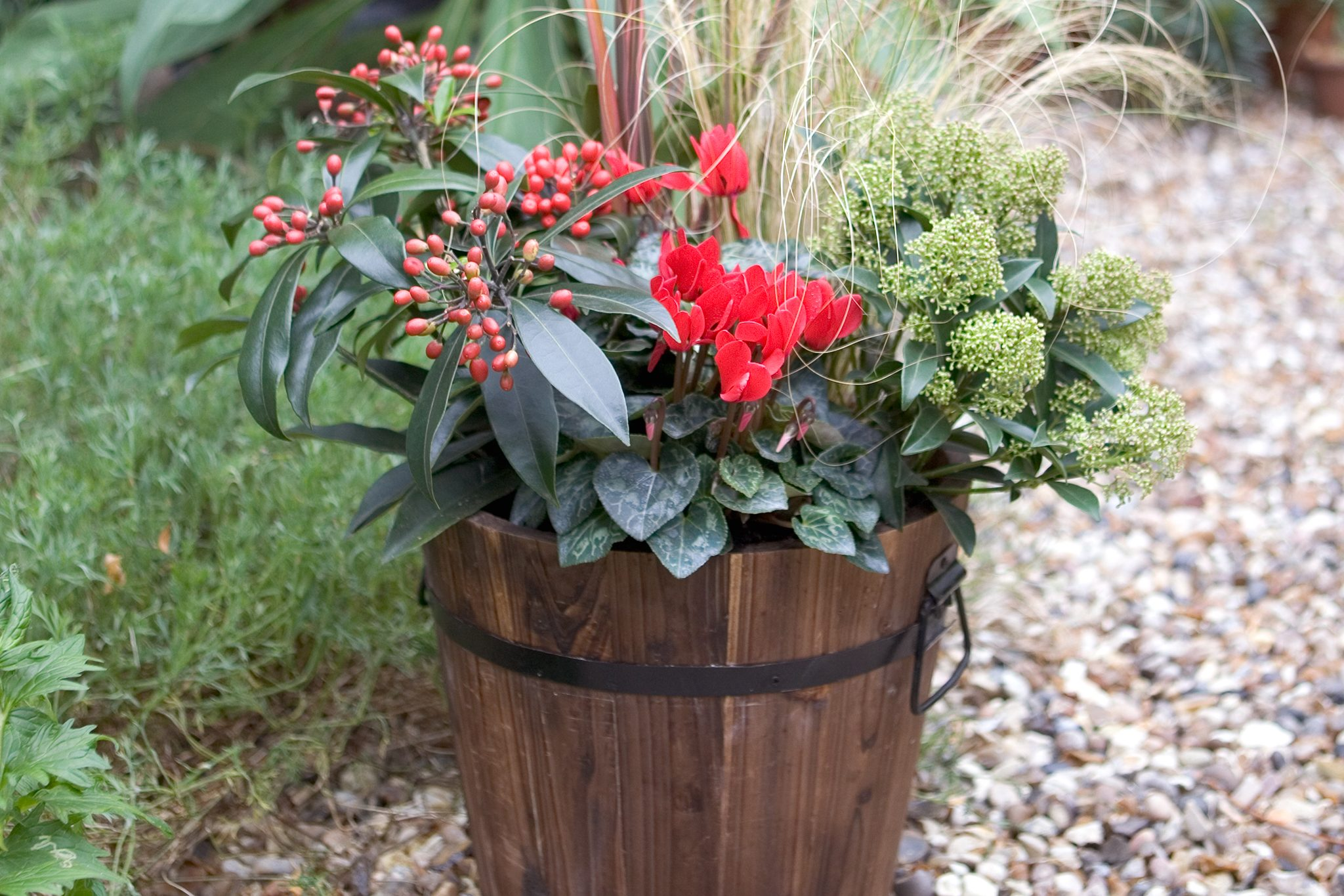 Gardeners\u0027 World & Top 10 plants for containers - BBC Gardeners\u0027 World Magazine