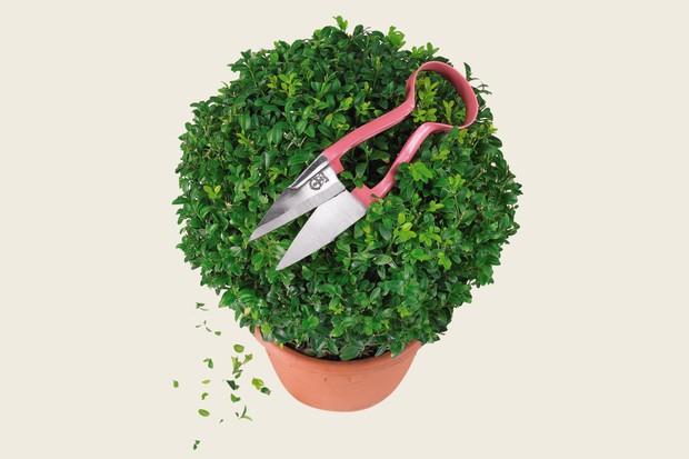 topiary-shears-6
