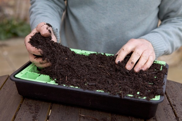 filling-a-seed-tray-2