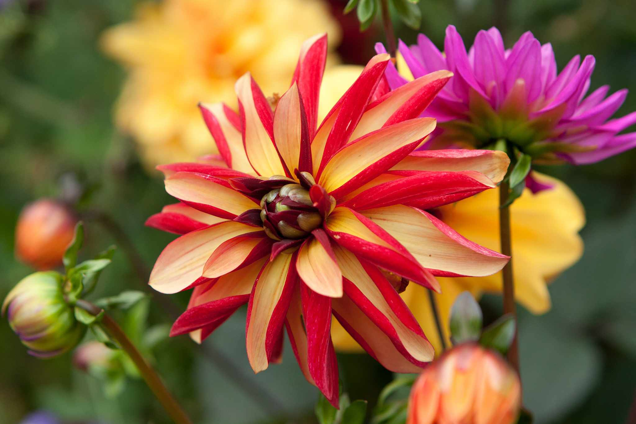 Plants for Colour in Every Month