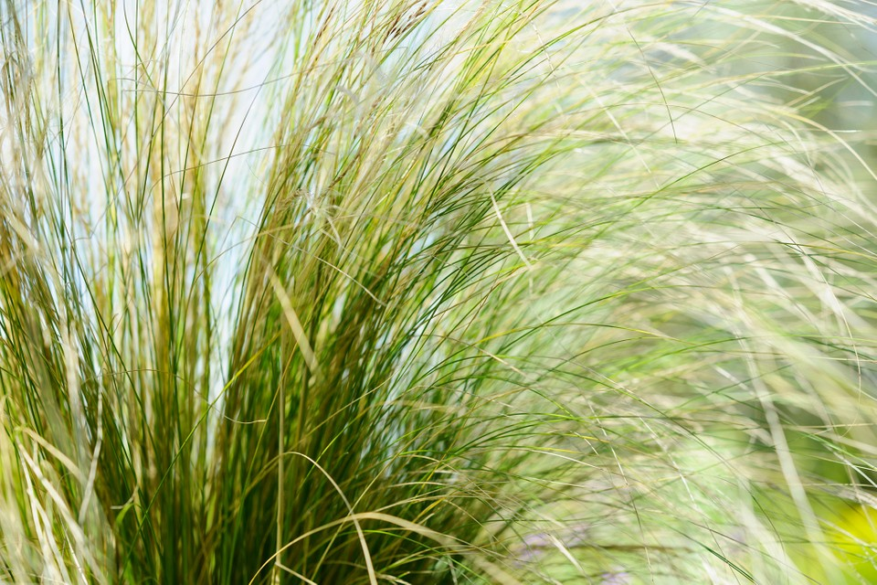 Nine Plants For Windy Gardens Bbc Gardeners World Magazine