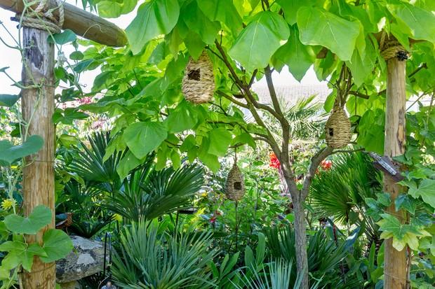 indian-bean-tree-with-bird-nesting-pockets-3