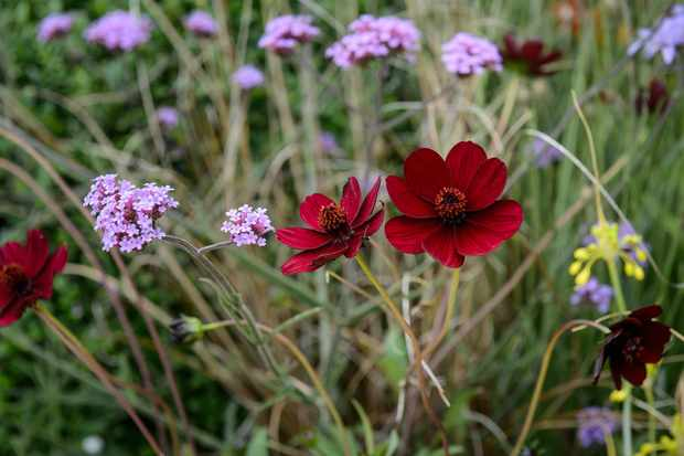 features-for-wildlife-single-flowers-9