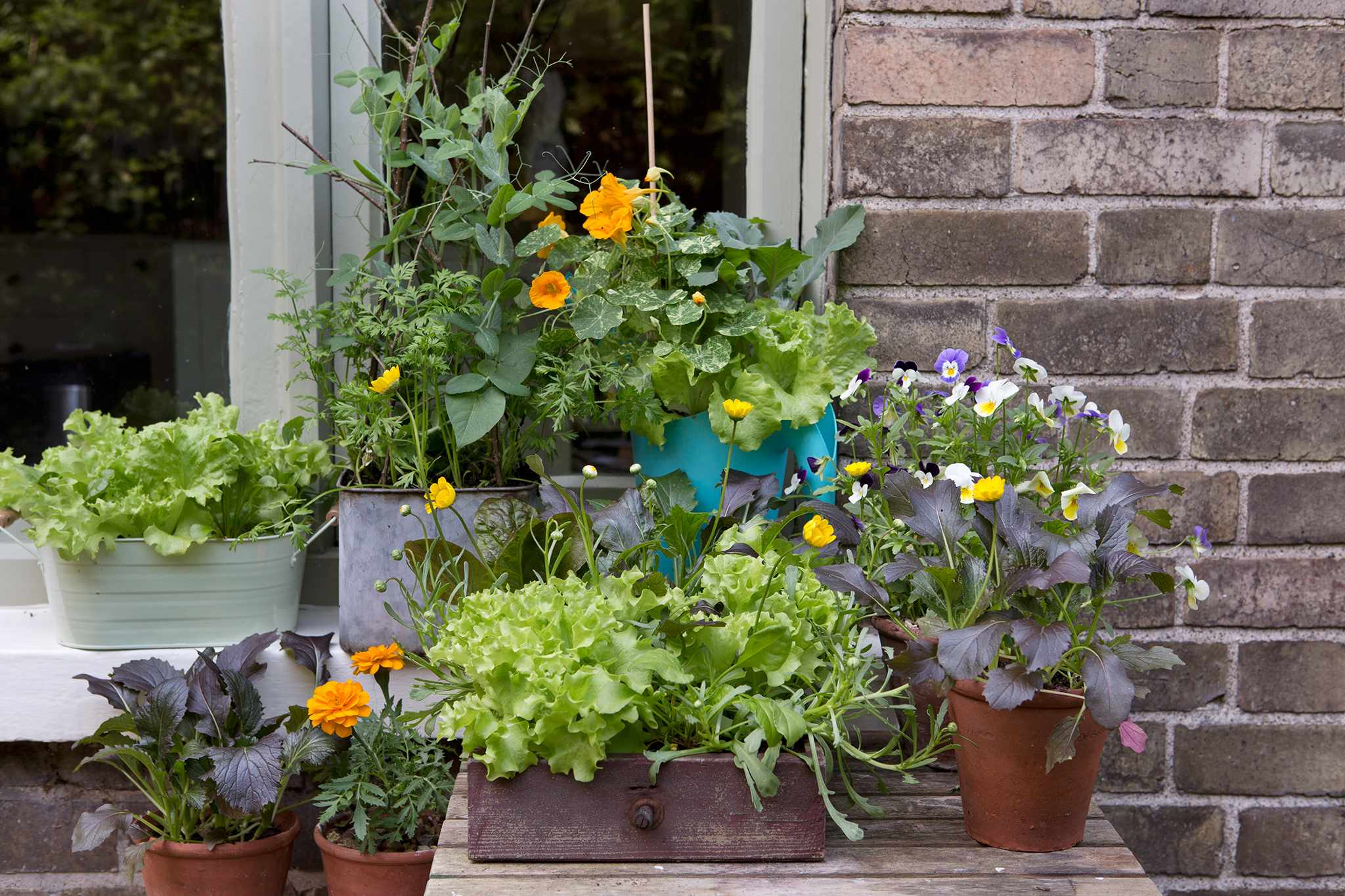 Windowsill Veg Container Ideas
