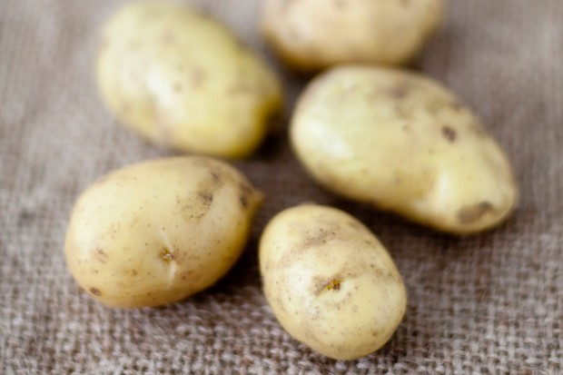 first-early-potatoes-2