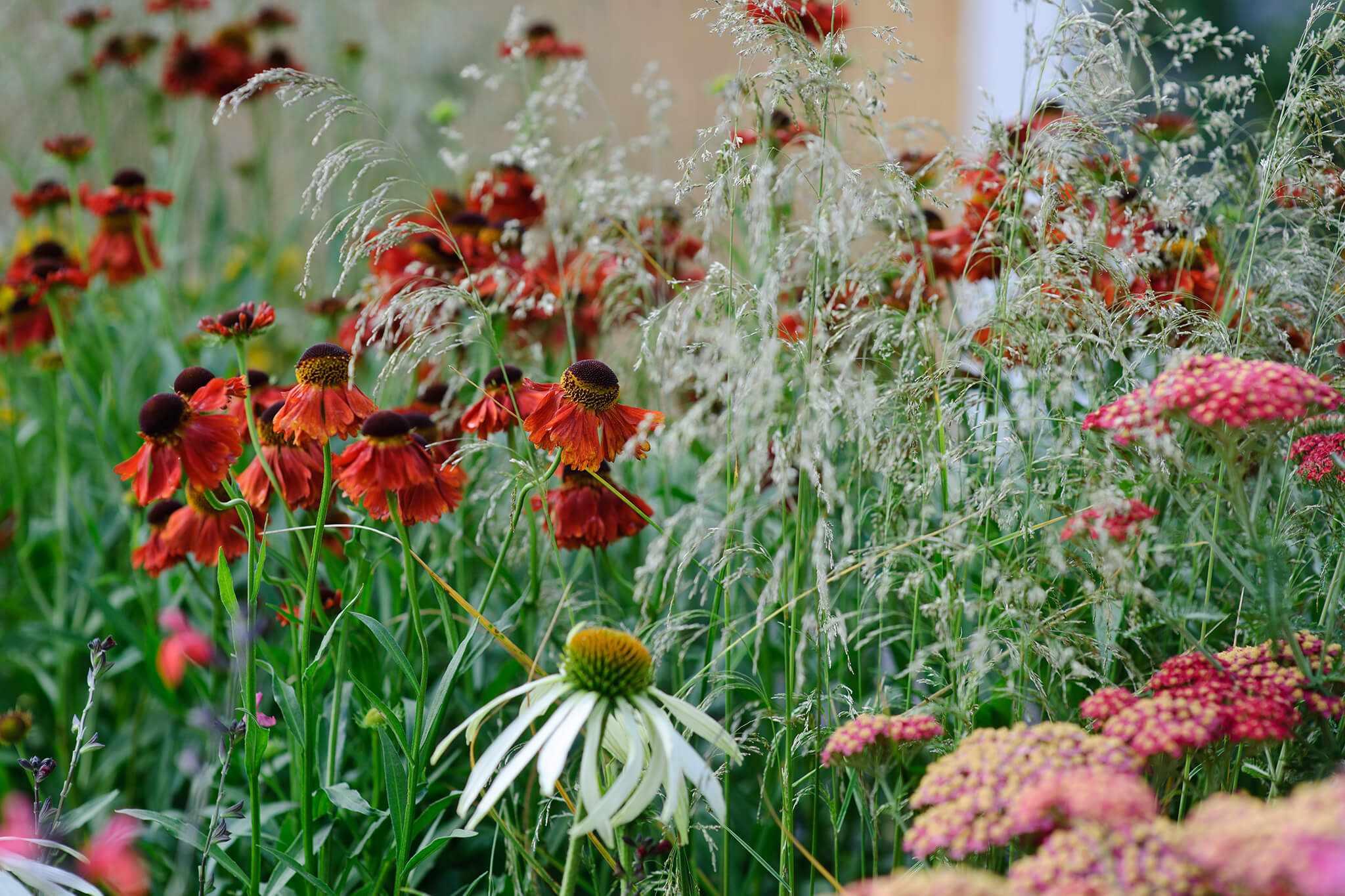 Best Plants for a Prairie Border