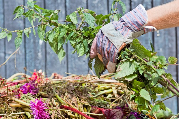 Adding nettles to a garden compost heap, handling with gloves