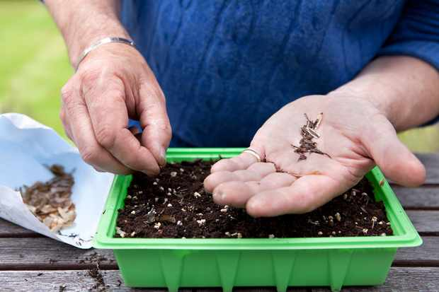 sowing-seeds-3
