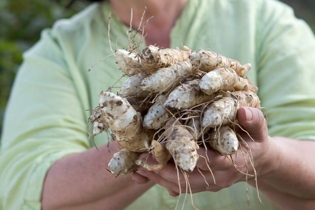 Handfuls of Jerusalem artichokes