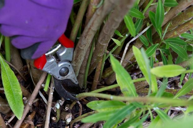 pruning-euphorbias-2