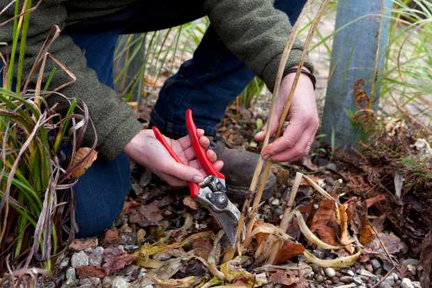 cutting-down-old-vegetable-plants-2