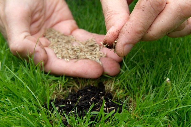 Reseeding a bare patch of lawn