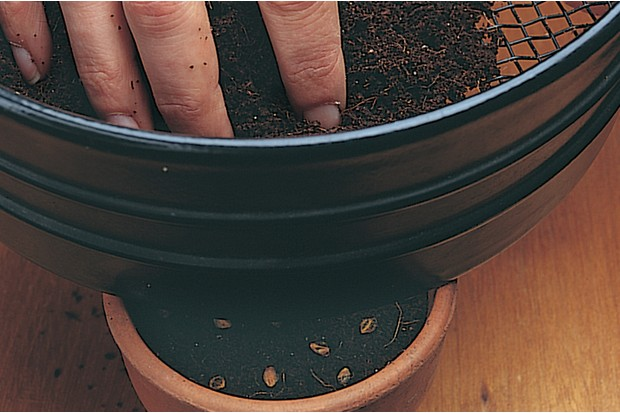 Sprinkling compost over the seeds