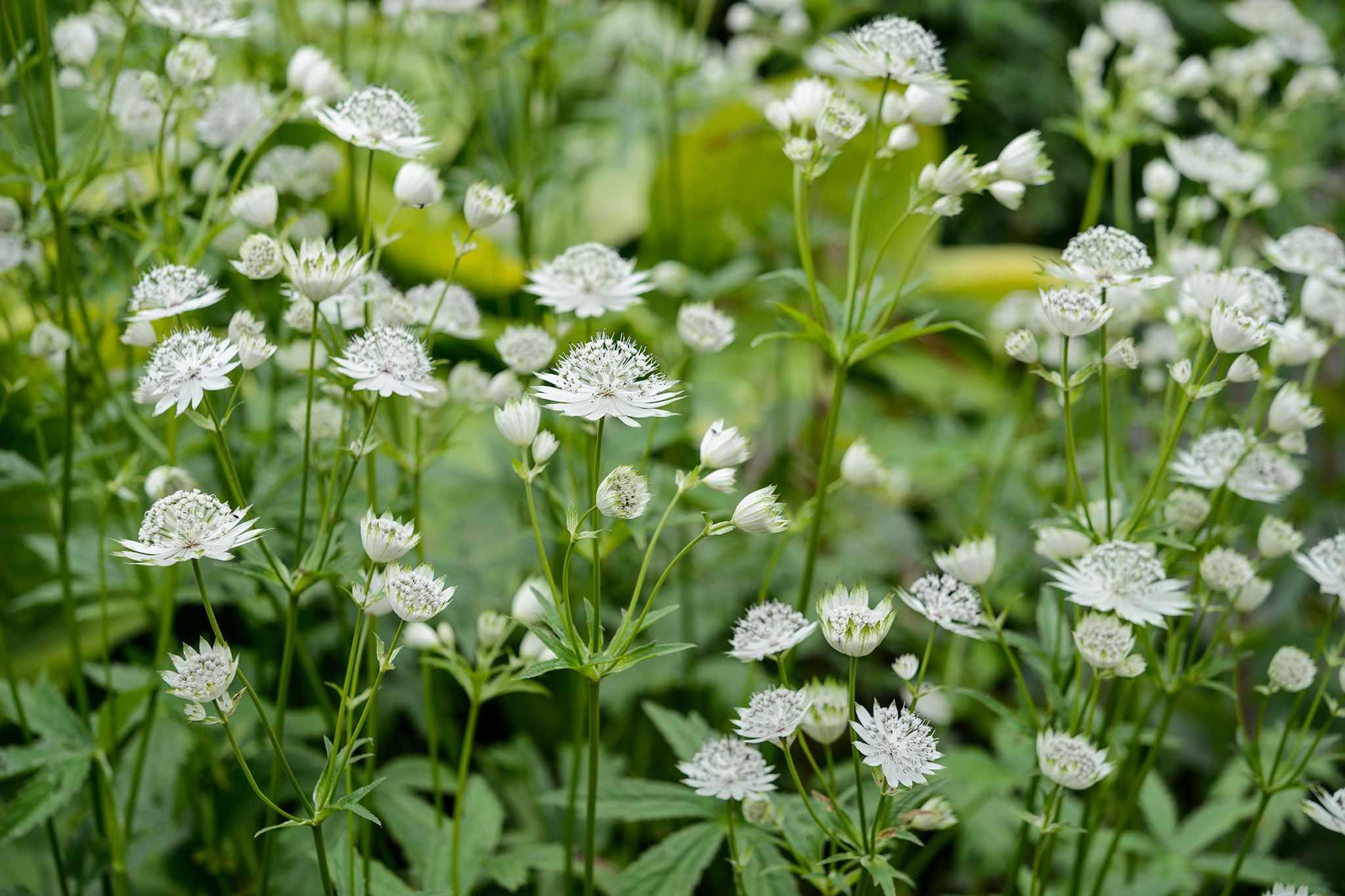 The Best Shade-Loving Plants