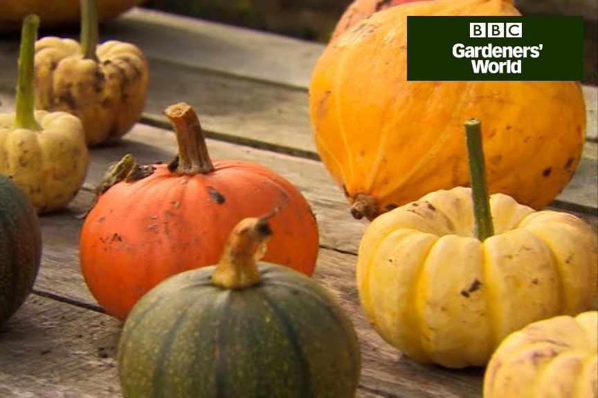 How to pick pumpkins