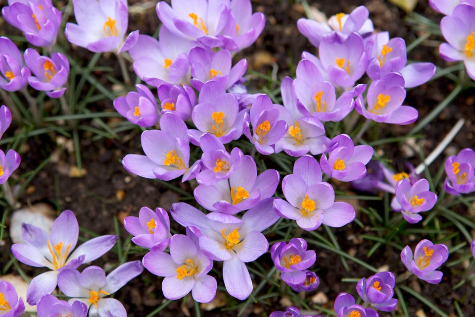 Five February Flowering Bulbs Bbc Gardeners World Magazine