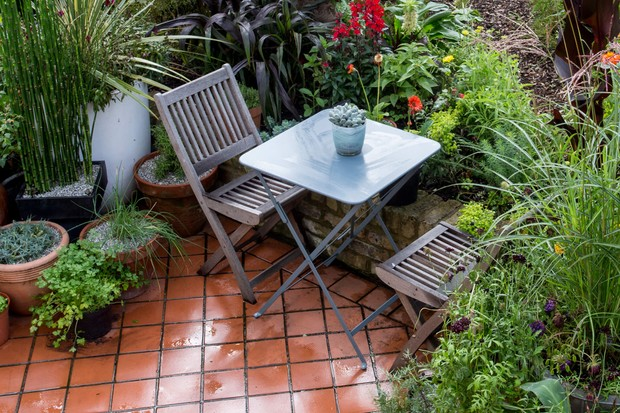 Top Plants For Patios In Pictures Bbc Gardeners World Magazine