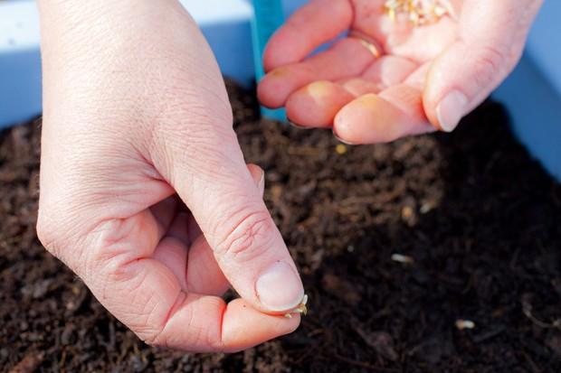 Sowing wildflower seed