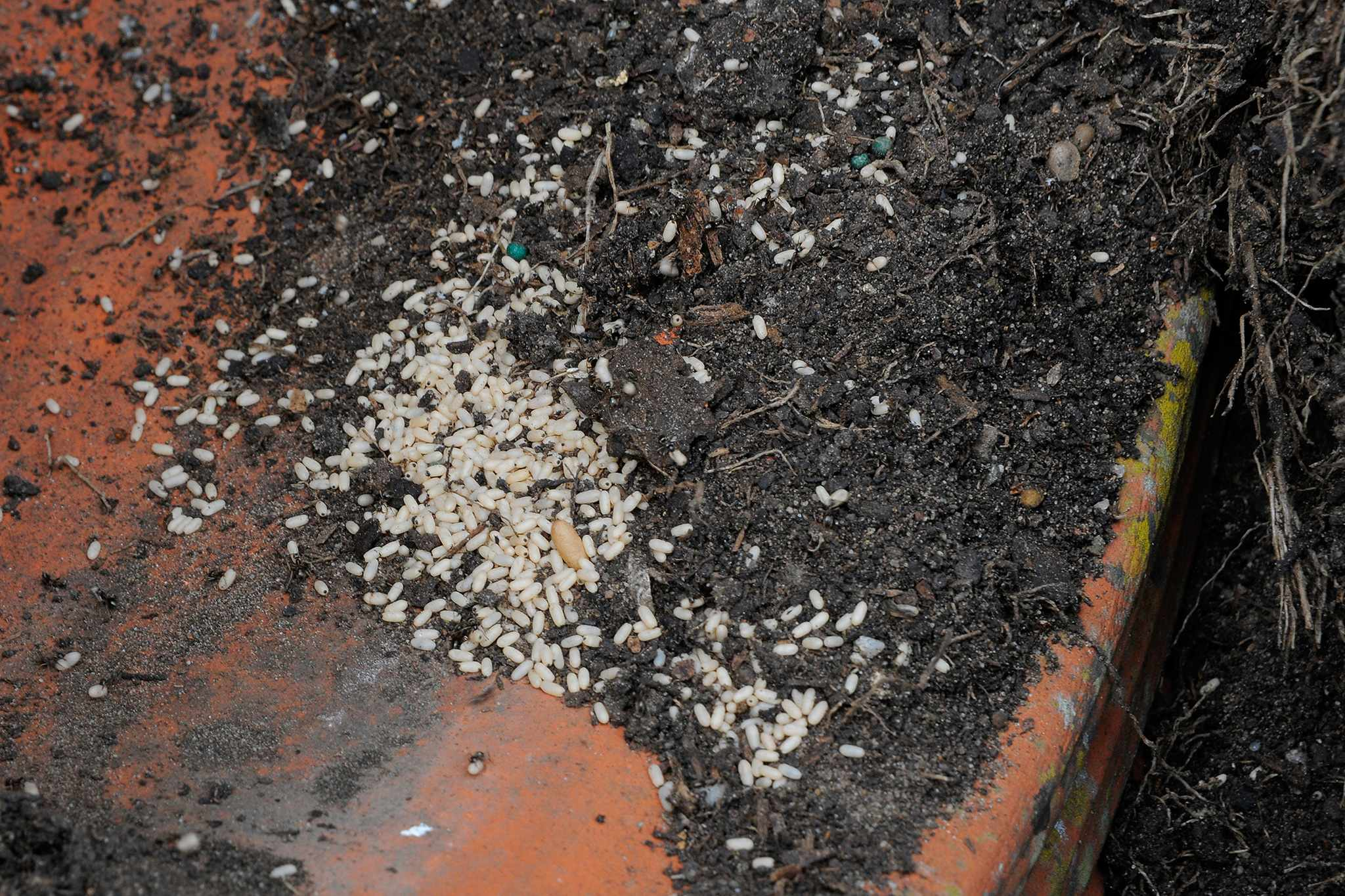 Ants in the garden