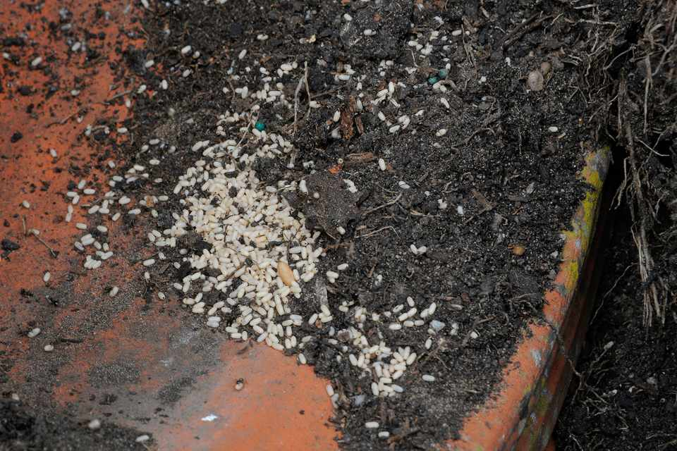 White ant eggs on the underside of a terracotta pot