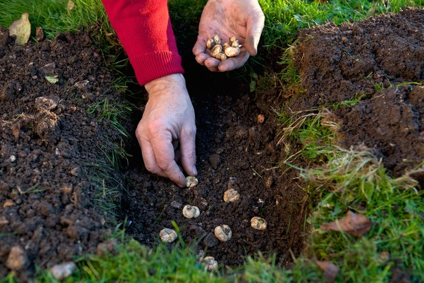 planting-spring-bulbs-2