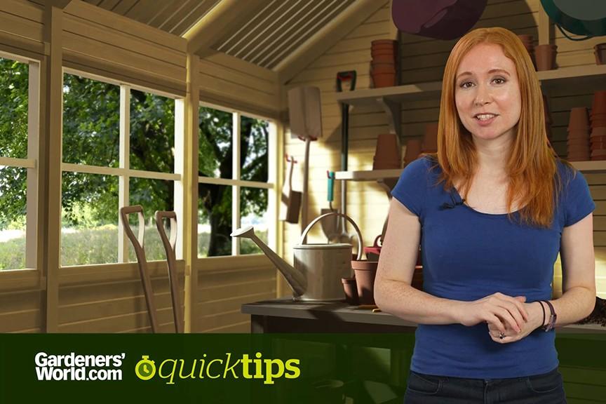 Quick Tips Why do flowers produce random stripes