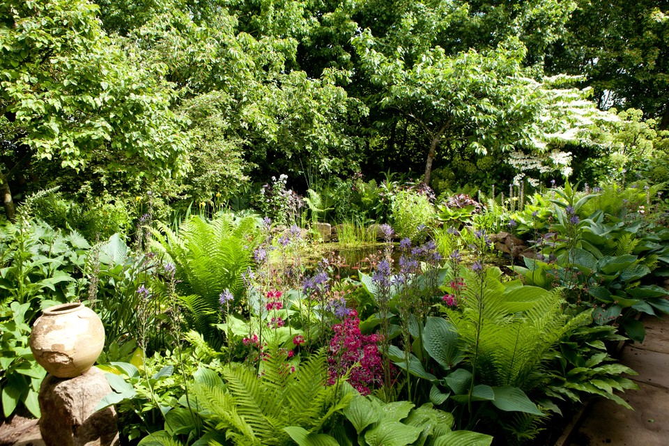 Types Of Garden Shade In Pictures Bbc Gardeners World Magazine