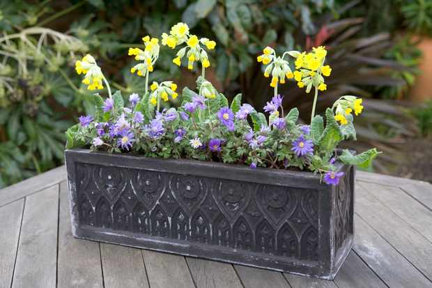 Cowslip and anemone pot display