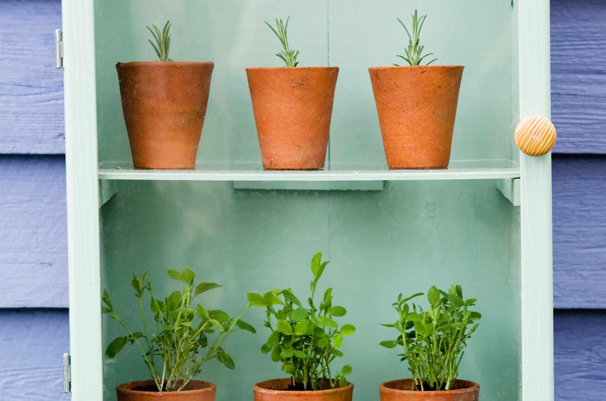 Creating a Mini-Greenhouse